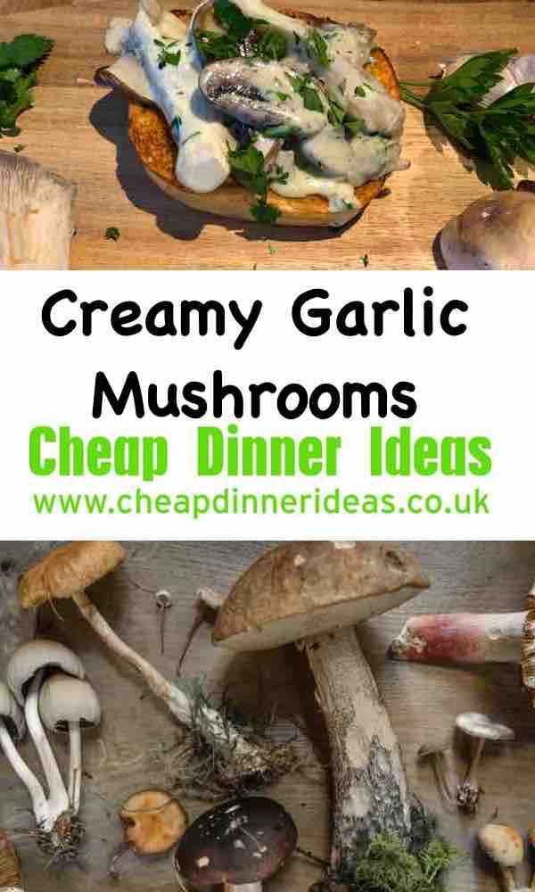 Wild mushrooms made into creamy garlic mushrooms